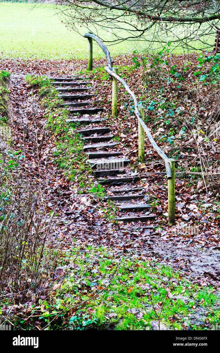 wet leaves covering stone steps slippery wooden hand rail Hubbards Hills Louth Lincolnshire UK England - Stock Image