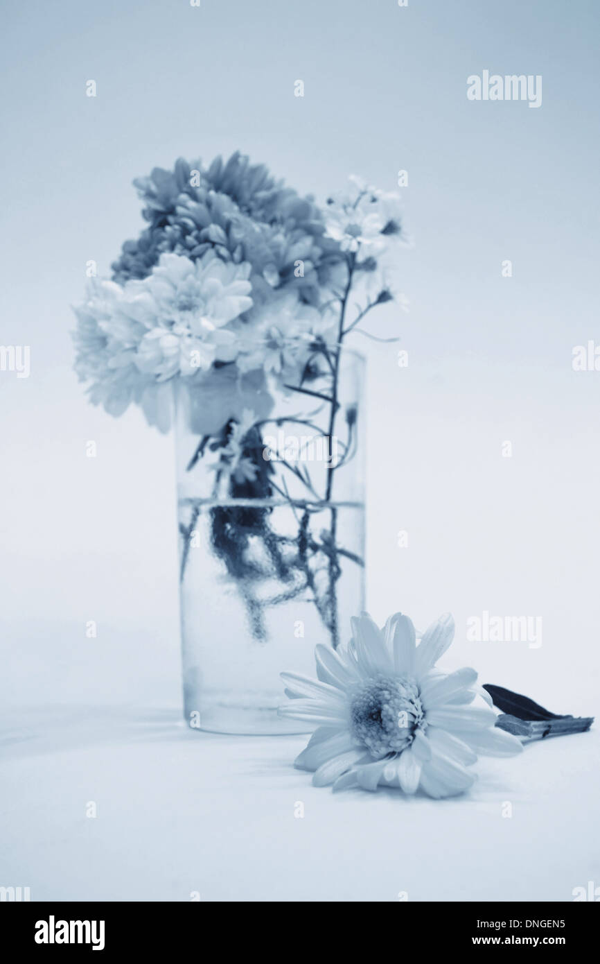 Bouquet of Flowers in a Glass on monotone color - Stock Image