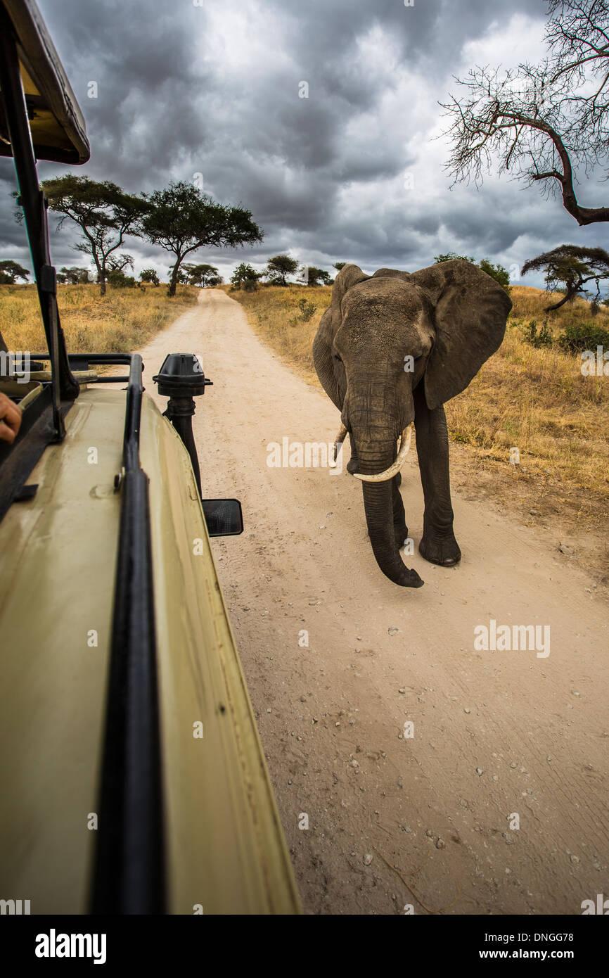 Elephant near safari car in Tarangire National Park, Tanzania - Stock Image