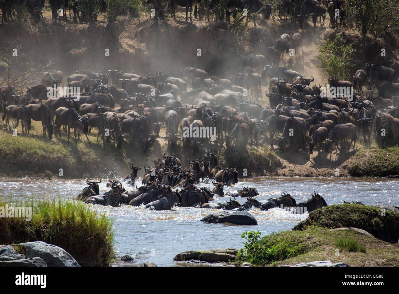 The great migration in North Serengeti, Tanzania - Stock Image