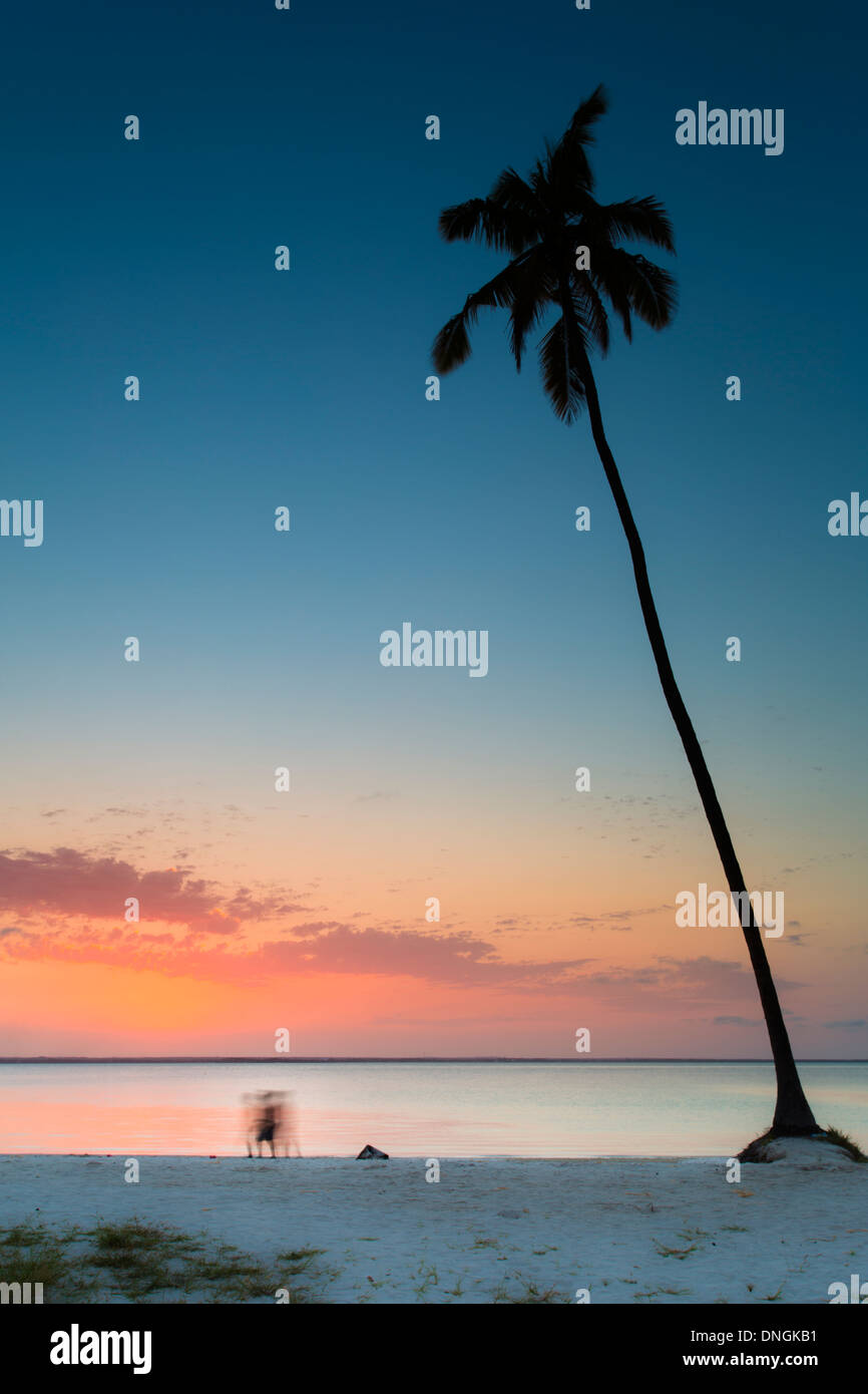 Palms and beach at sunset in Zanzibar, Tanzania - Stock Image