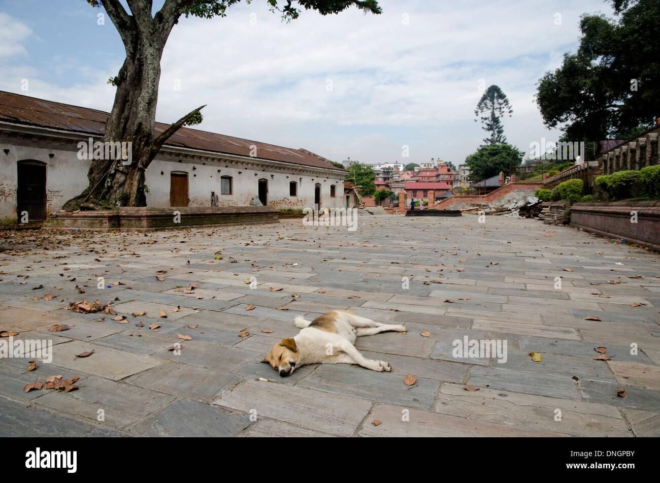 A sleeping stray dog in Pashupathinah Temple, Kathmandu, Nepal Stock Photo