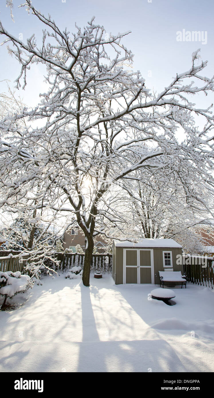 Ice storm during Canadian winter, branches covered in ice and snow - Stock Image