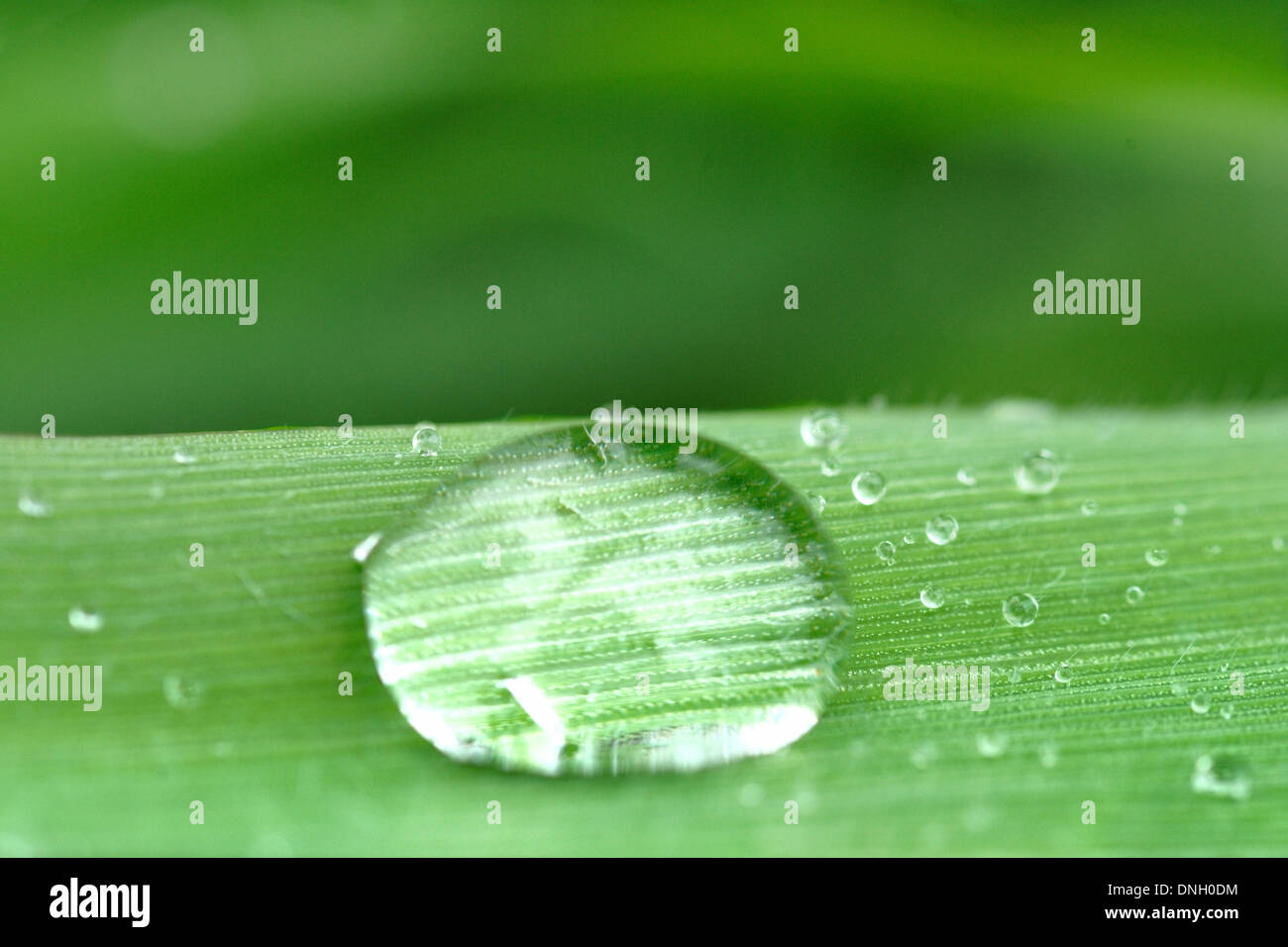 Drop water on leaf. Limpid and transparency freshness. Beauty and wellness - Stock Image