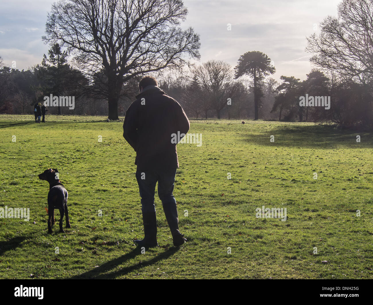A man walks his Doberman puppy in Nonsuch Park in Cheam, Surrey. - Stock Image