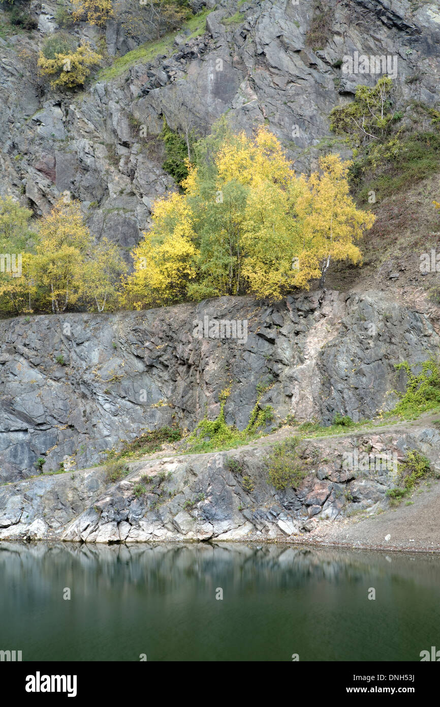 Silver Birch, Betula pendula, in Autumn colour line the cliff edge of Gullet Quarry, Malvern Hills, Worcestershire. Stock Photo