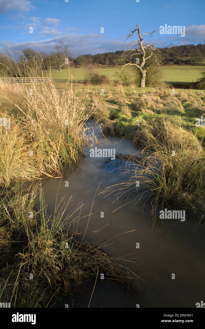 A stream runs through Eastnor Deer Park, Worcestershire, in the winter. Stock Photo