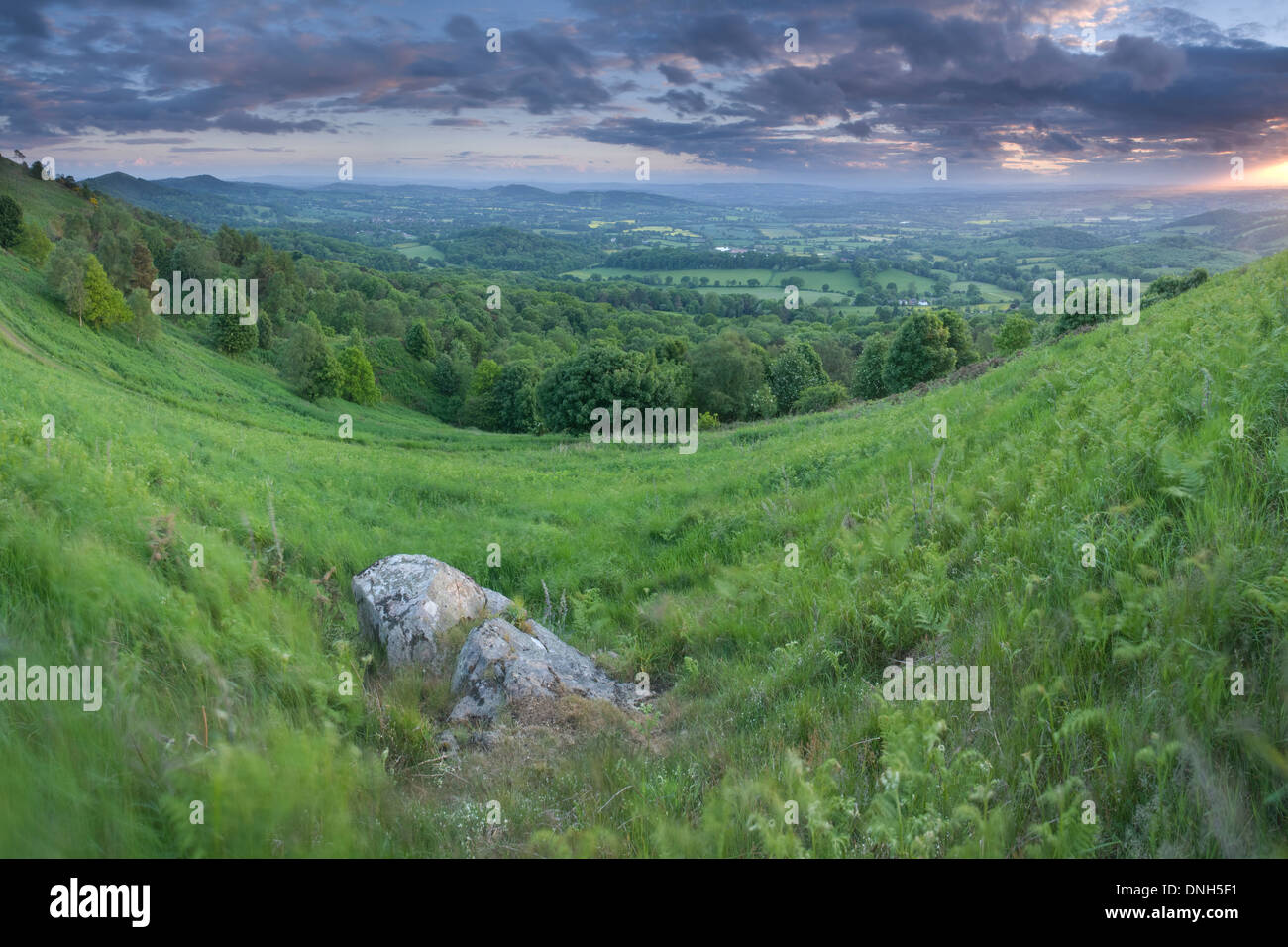 A Rock amongst the Bracken and Foxgloves in the valley between Summer Hill and the Worcestershire Beacon on the Stock Photo