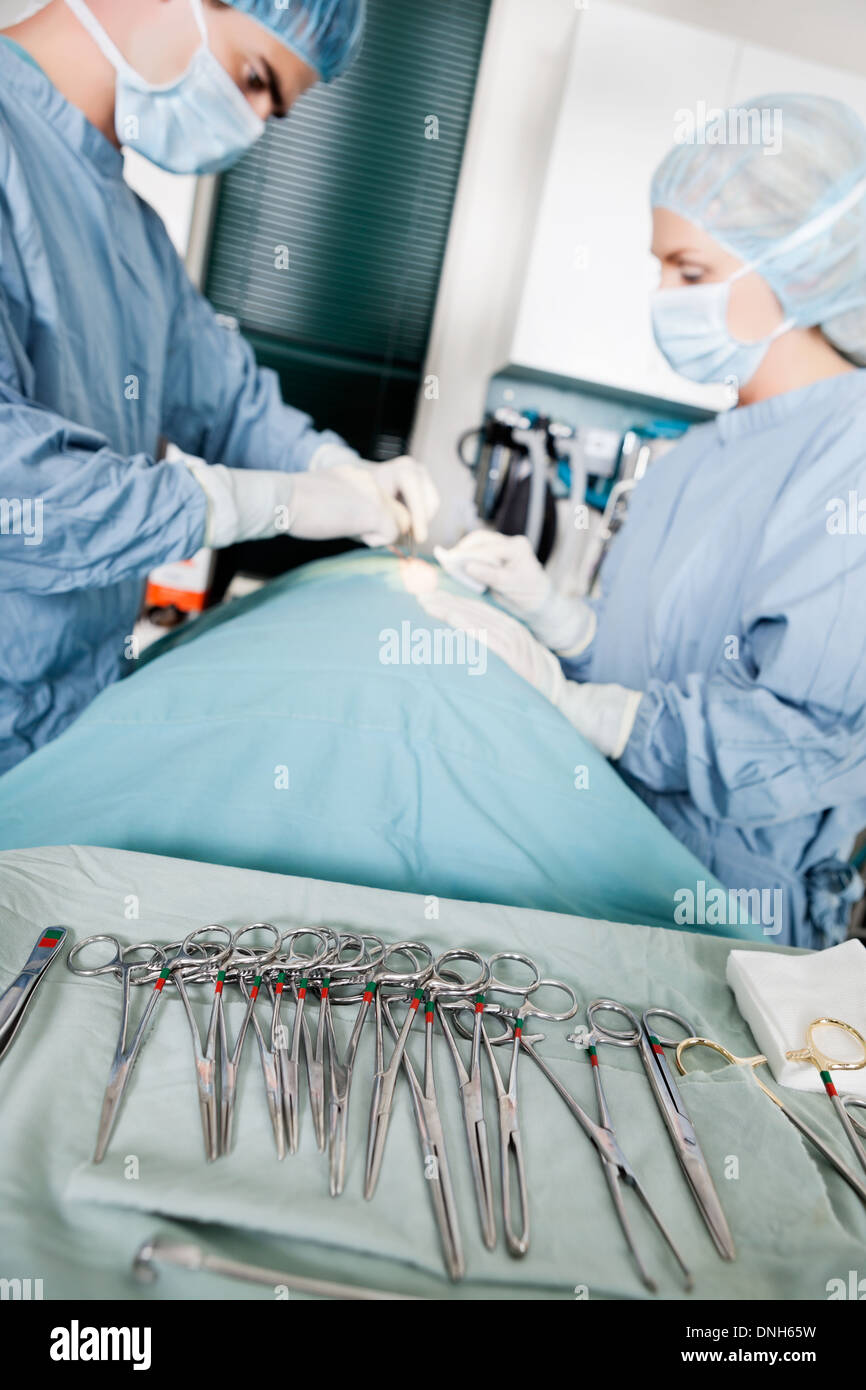 Focus On Surgical Forceps With Veterinarian Doctors In Operating - Stock Image