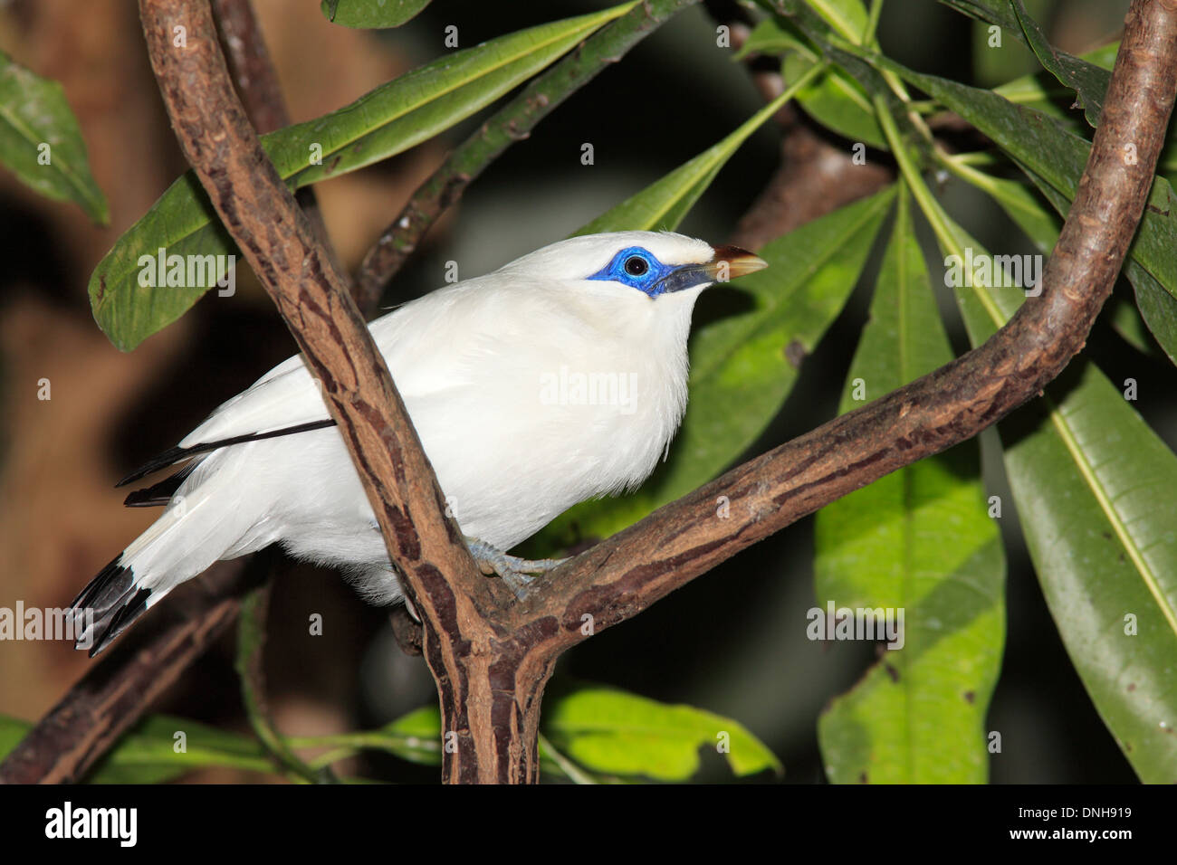 Page 2 Burung High Resolution Stock Photography And Images Alamy