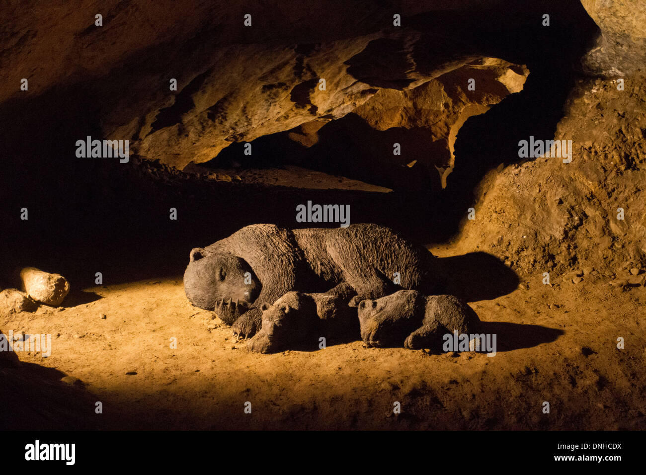 Bears hibernating in Arrikrutz caves, Oñati, Basque Country - Stock Image