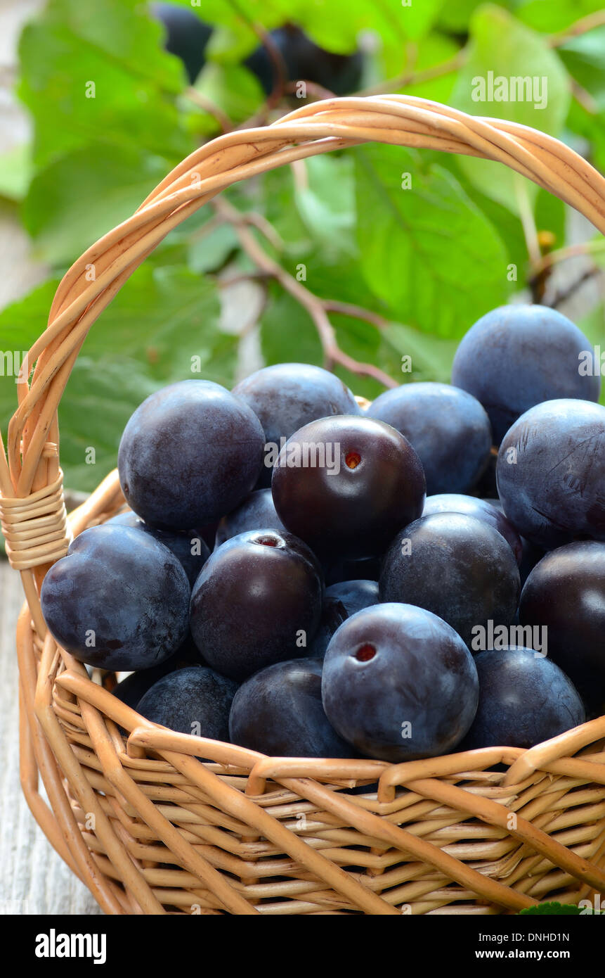 Ripe plums in basket on the wooden table, close up view - Stock Image