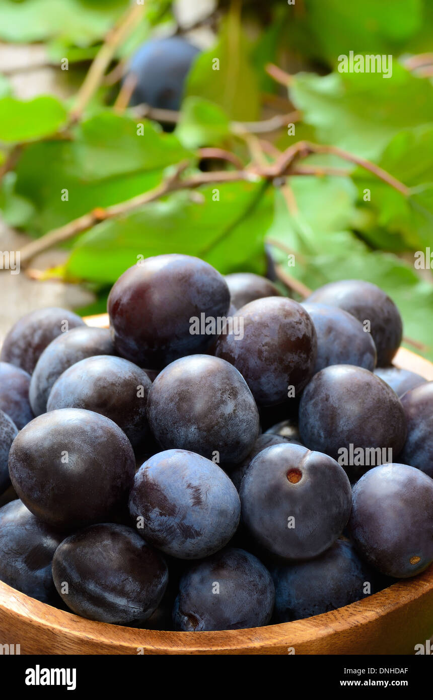 Plums in bowl on the wooden table, close up view - Stock Image