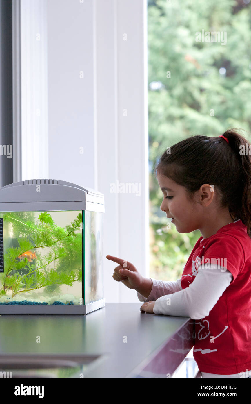 Little girl pointing at her goldfish in the aquarium - Stock Image