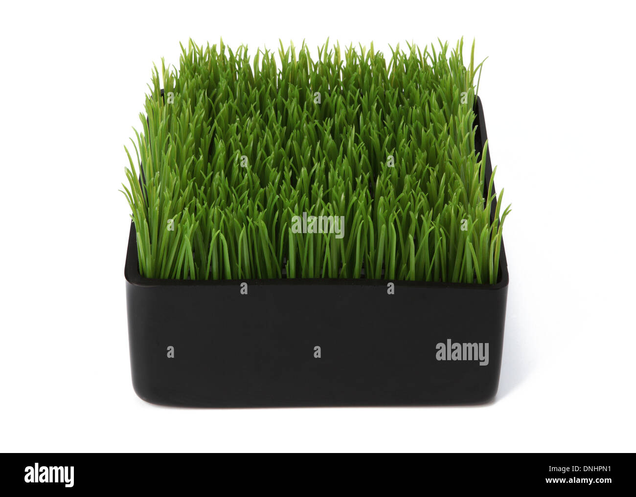 A small container with green grass on a white background. - Stock Image