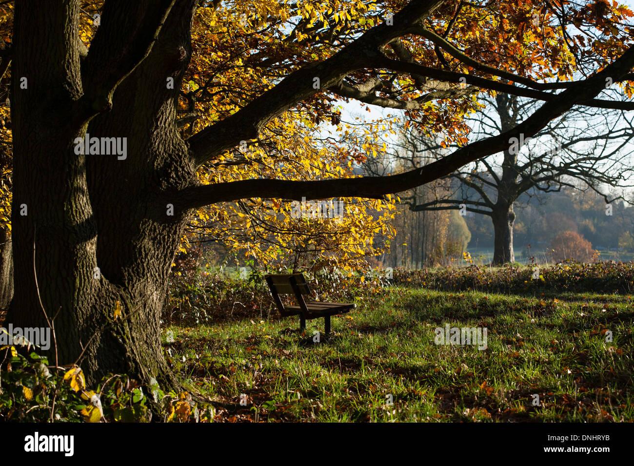 A park bench under an oak tree in Hampstead Heath. - Stock Image