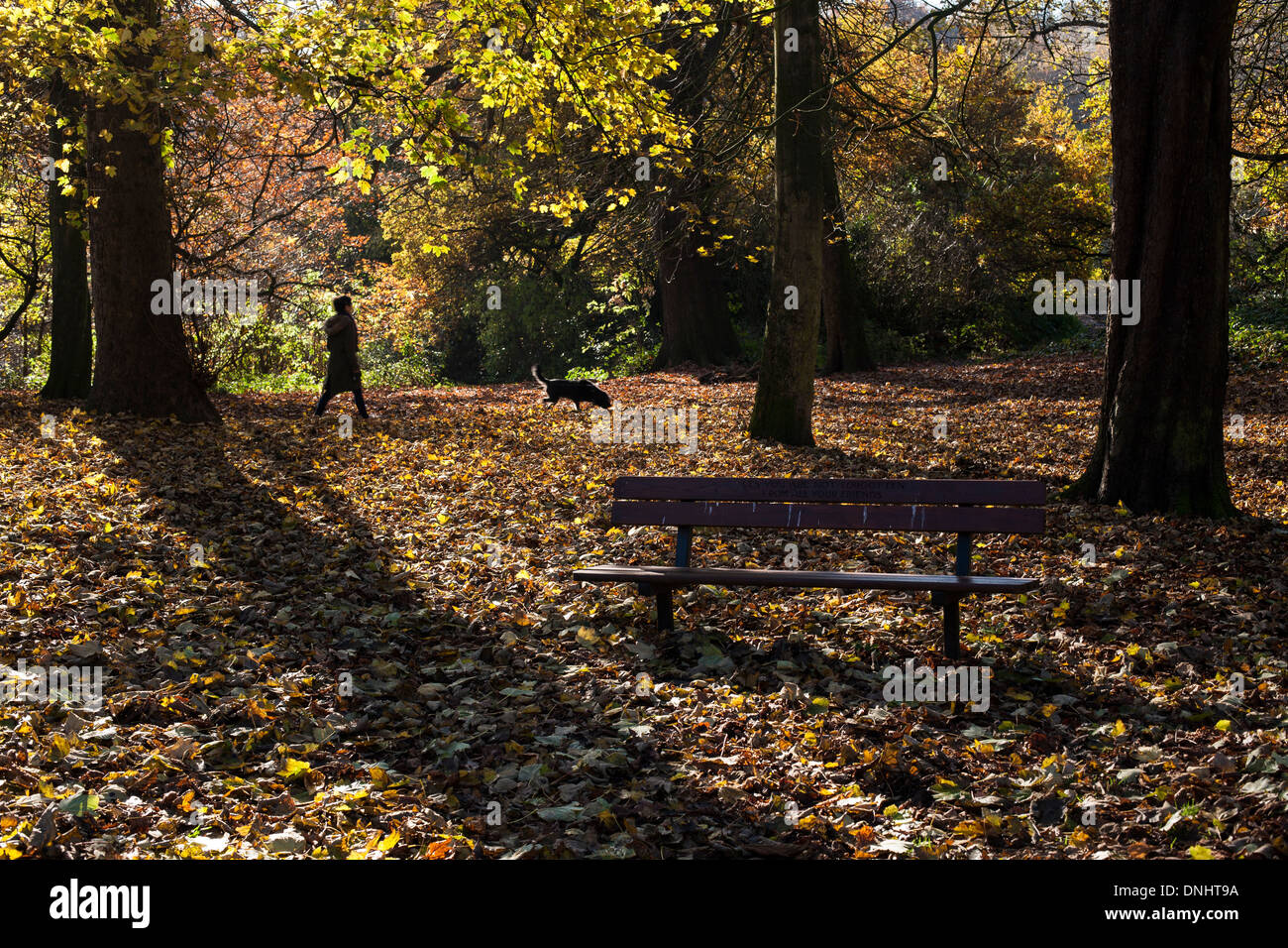 A young woman walking her dog past a park bench in Hampstead Heath. - Stock Image