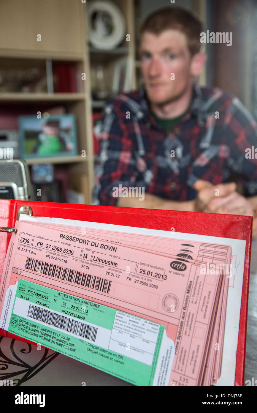 BOVINE (COW, STEER, BULL, CALF) PASSPORT FOR THE TRACEABILITY OF THE ANIMALS, CATTLE FARM OF LIMOUSINE COWS, SAINT-AUBIN-LE-VERTUEUX, EURE (27), FRANCE - Stock Image