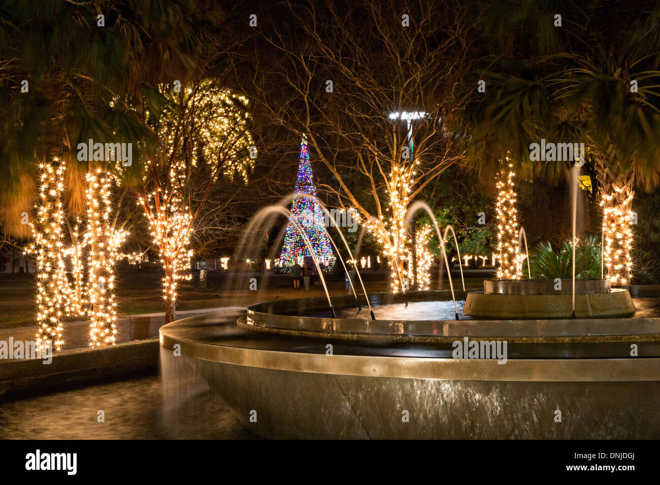 christmas lights on marion square in historic charleston south carolina stock image