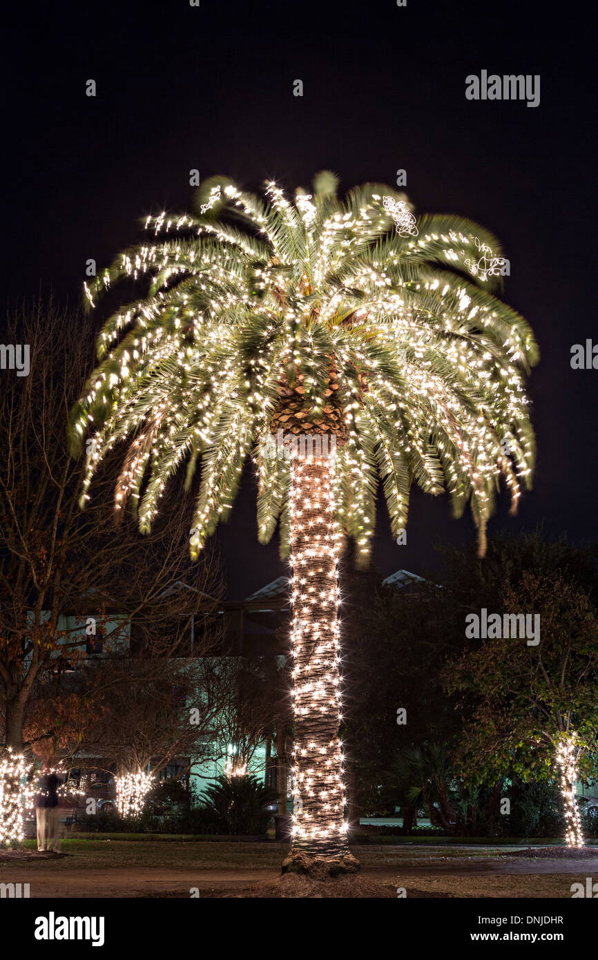 Christmas Lights In Palm Trees.Palm Tree With Christmas Lights On Marion Square In Historic