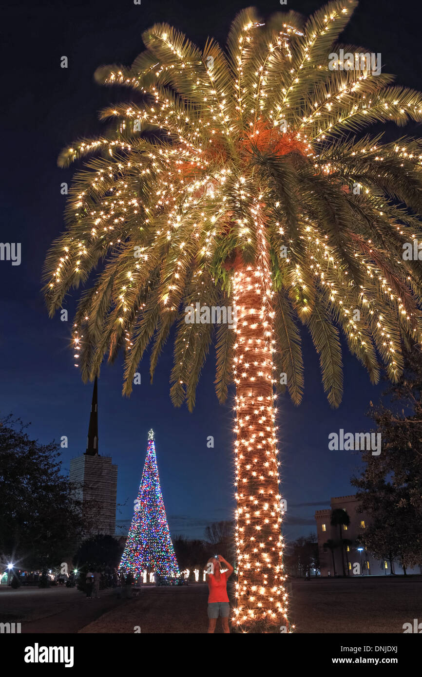 palm tree with christmas lights on marion square in historic charleston south carolina - Palm Tree Christmas Decorations
