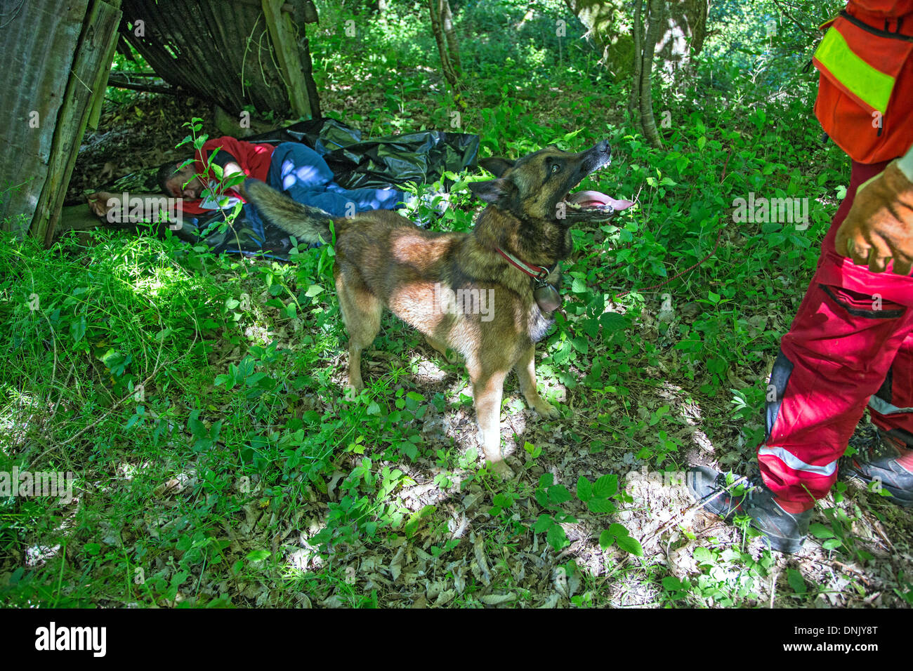 FIRE DEPARTMENT RESCUE DOG THAT HAS JUST SHOWN ITS MASTER A VICTIM, SDE3 ECASC SECTION CHIEF TRAINING, FORMER QUARRIES OF GUICHEN, ILLE-ET-VILAINE (35), FRANCE - Stock Image