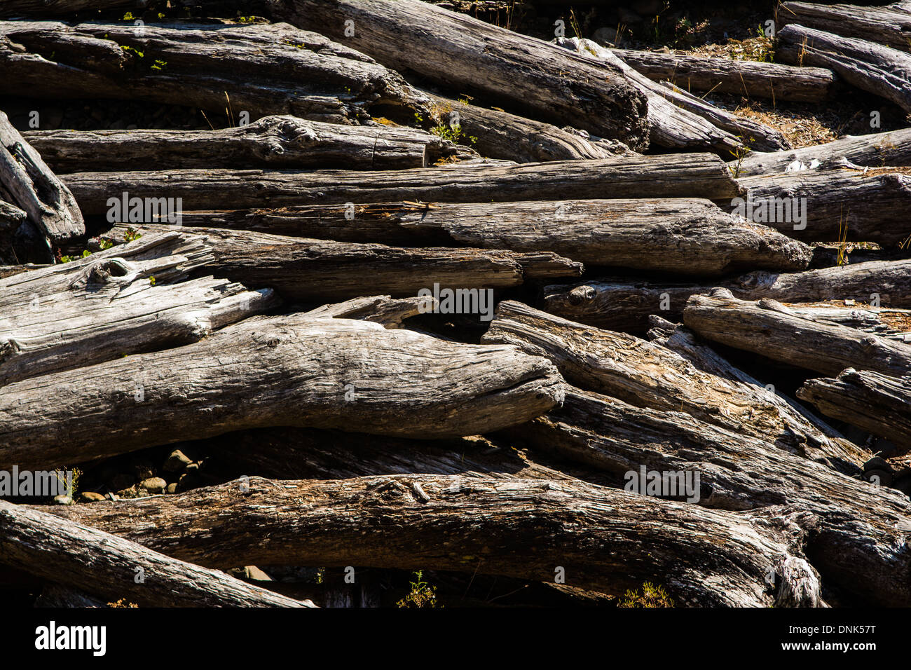 Beached logs, Short Sands State Beach, Oregon, USA - Stock Image