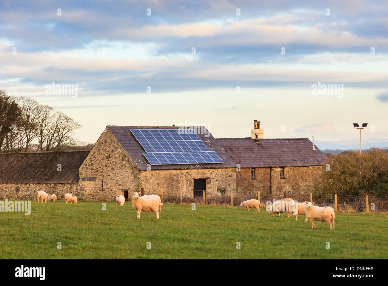 Solar panels on a roof of an old barn on a rural Welsh sheep farm in Anglesey, North Wales, UK, Britain - Stock Image