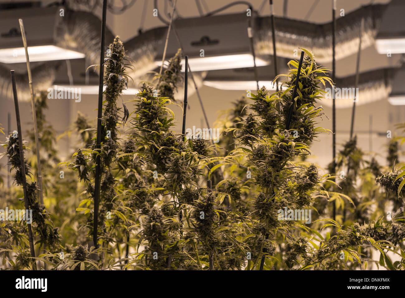 Marijuana chatroom
