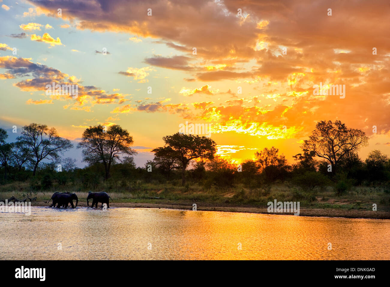 Iconic African sunset at Jones Dam with a herd of elephants  in Kruger National Park in South Africa Stock Photo