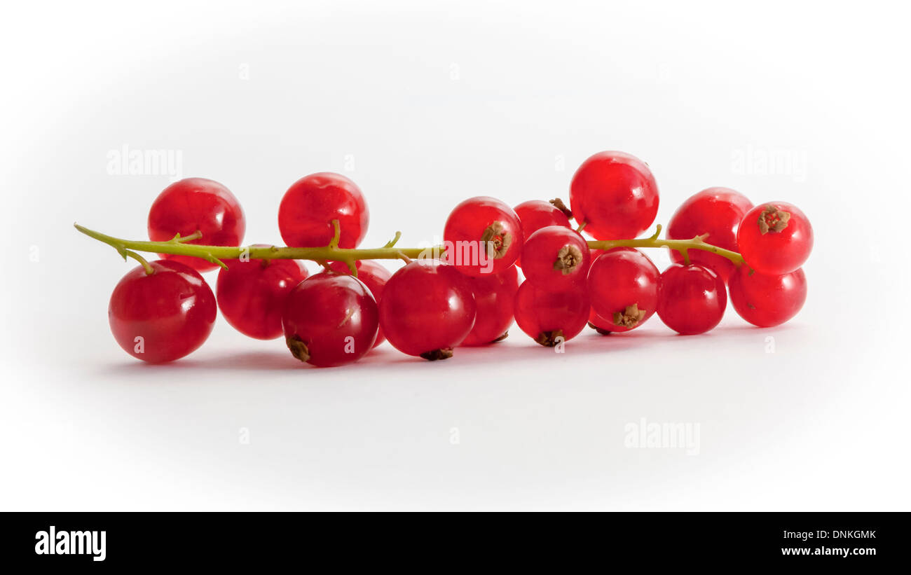 The redcurrant, Ribes rubrum,  a berry of the genus Ribes,  in the gooseberry family Grossulariaceae, native to Stock Photo