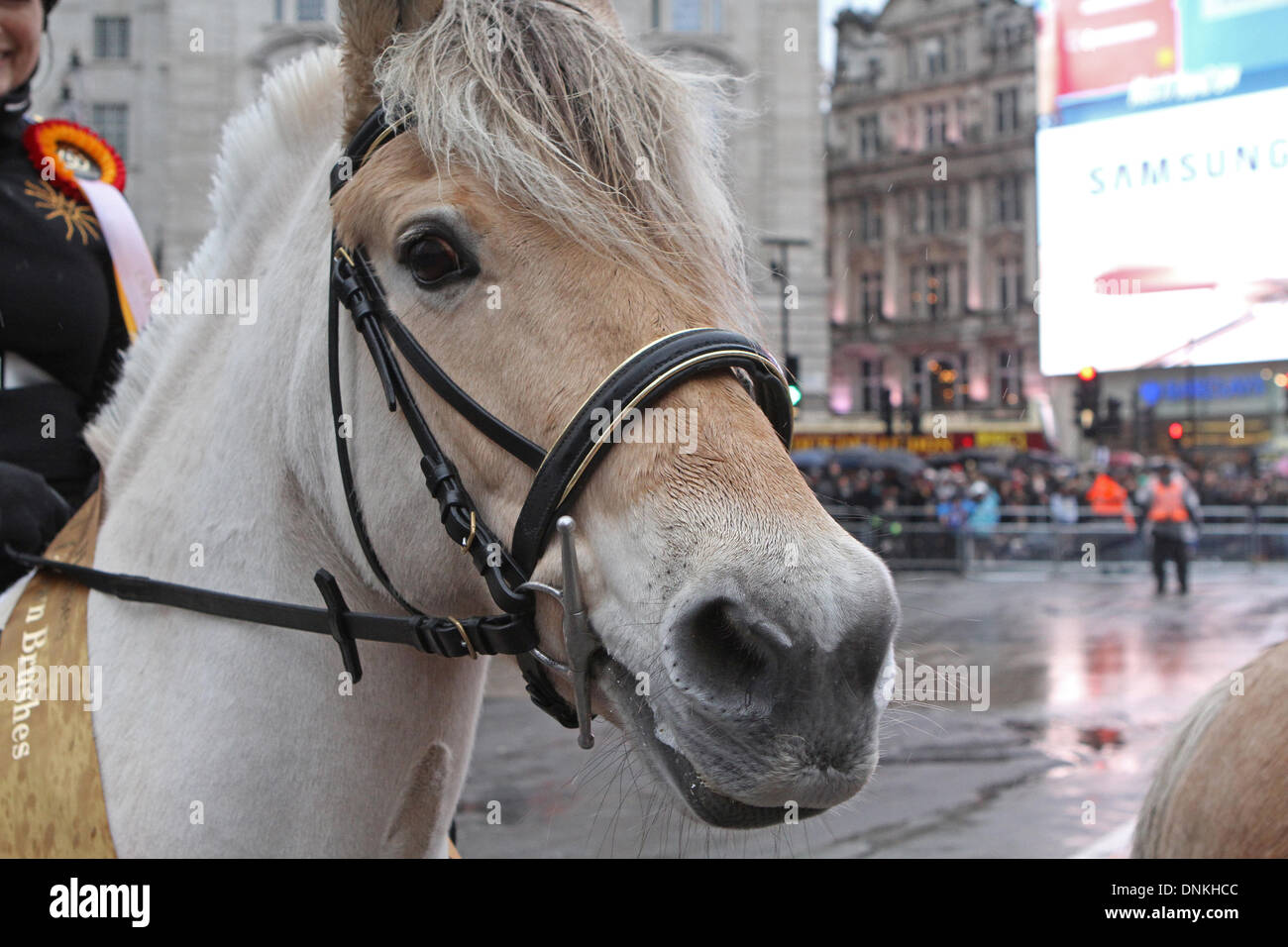 London,UK,1st January 2014,Horses joined the London's New Year's Day Parade 2014 Credit: Keith Larby/Alamy Live News - Stock Image