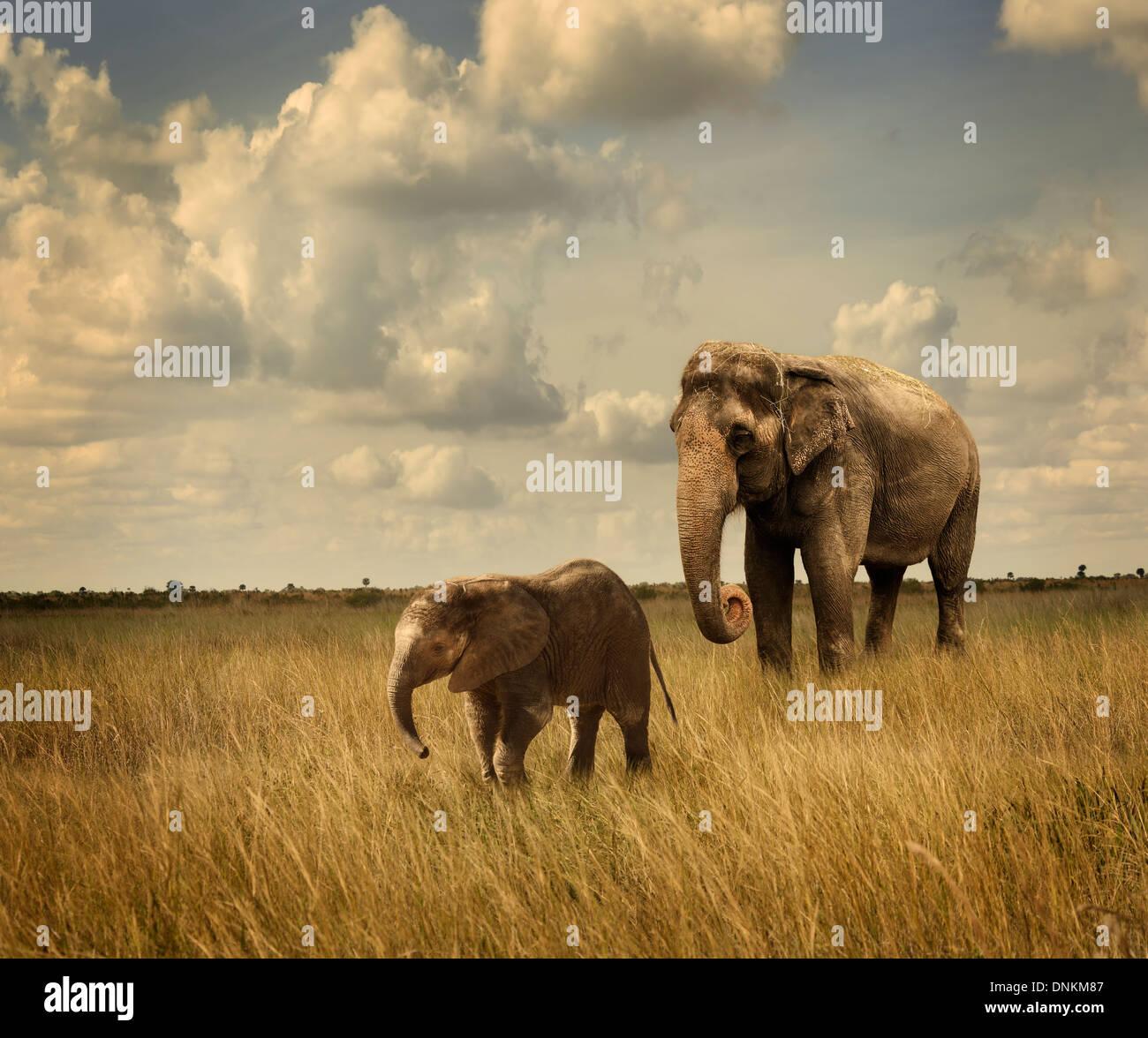 Mother And Baby Elephants Walking - Stock Image