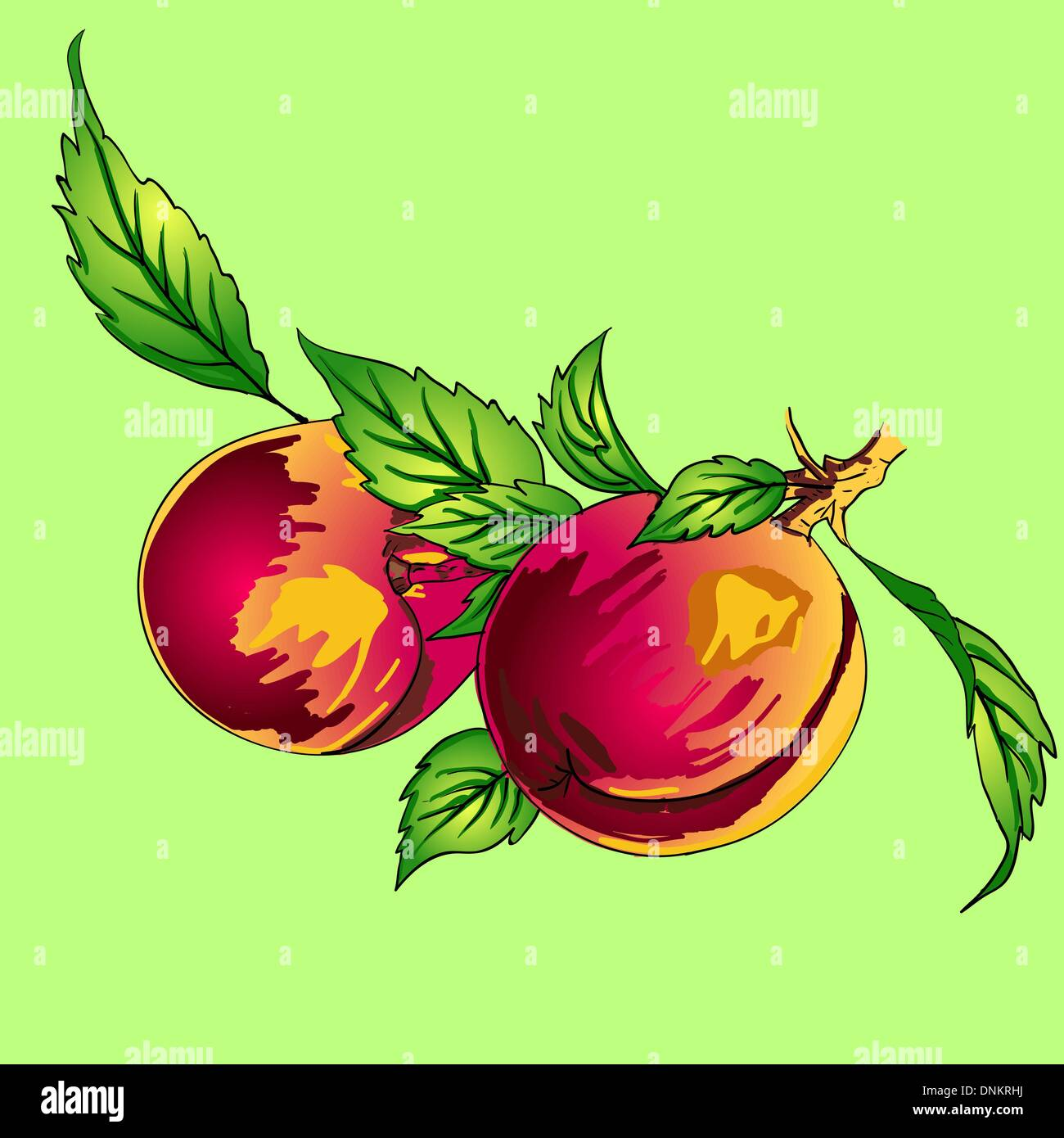 Two peaches with leaves on a branch on a light background - Stock Image