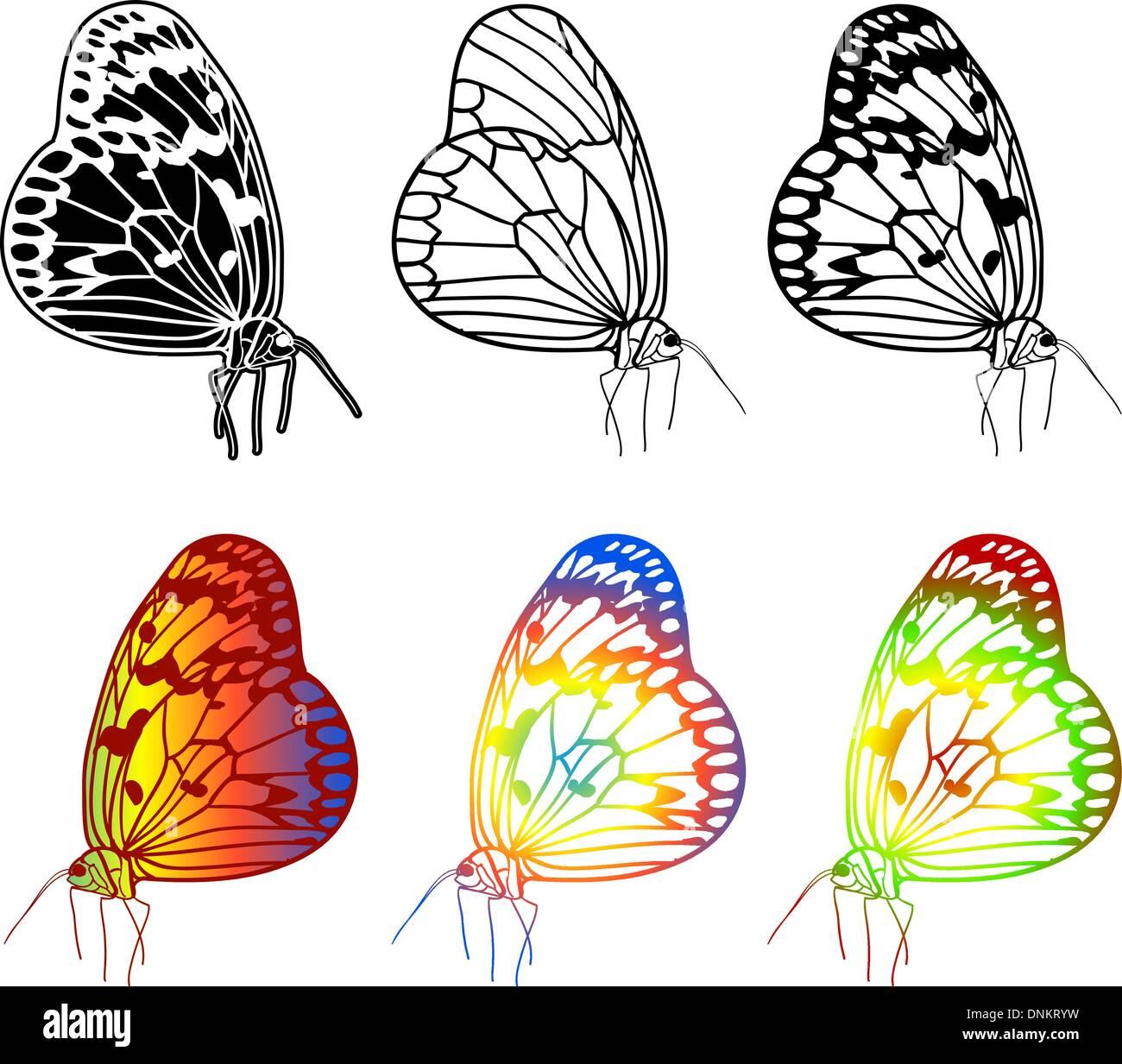 Vector set of beautiful butterflies. - Stock Image