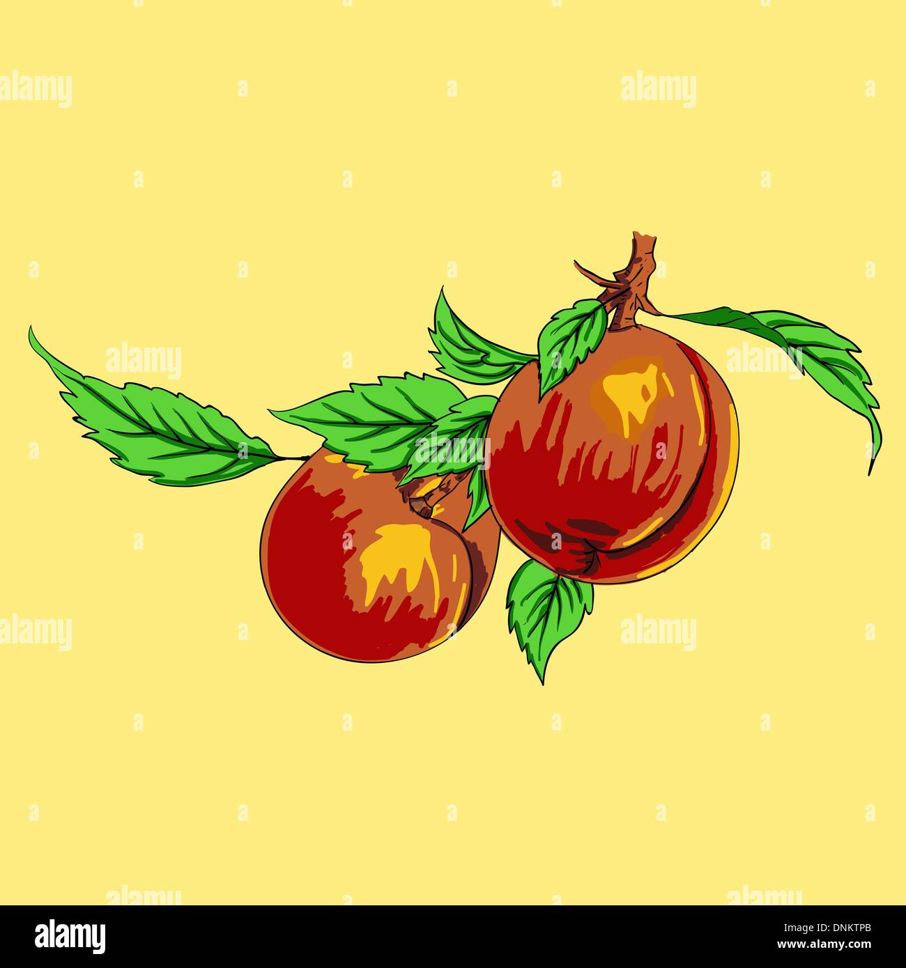 Two peaches with leaves on a branch on a light background Stock Vector