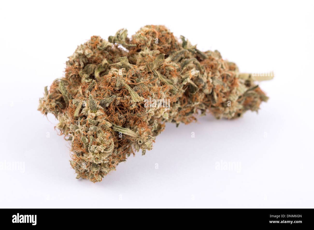A large dried and cured high quality cannabis sativa bud shot on a seamless white background. - Stock Image