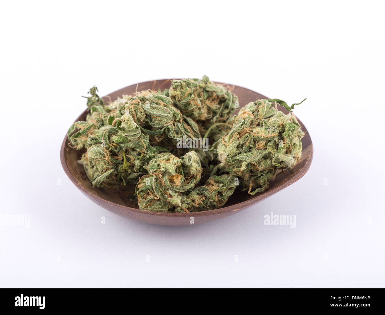 Cannabis buds on a coconut shell shot on a seamless white background. - Stock Image