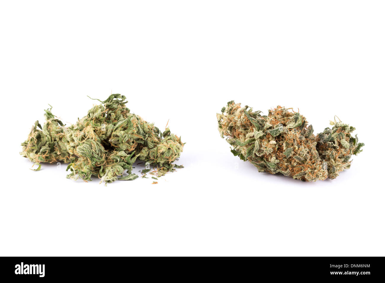 Two different types (or strains) of marijuana  High grade cannabis