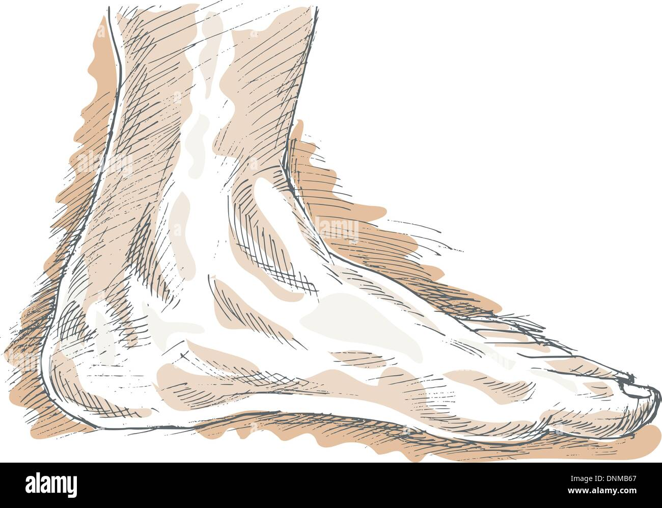 hand sketch drawing  illustration of the left human foot with highlights. - Stock Vector