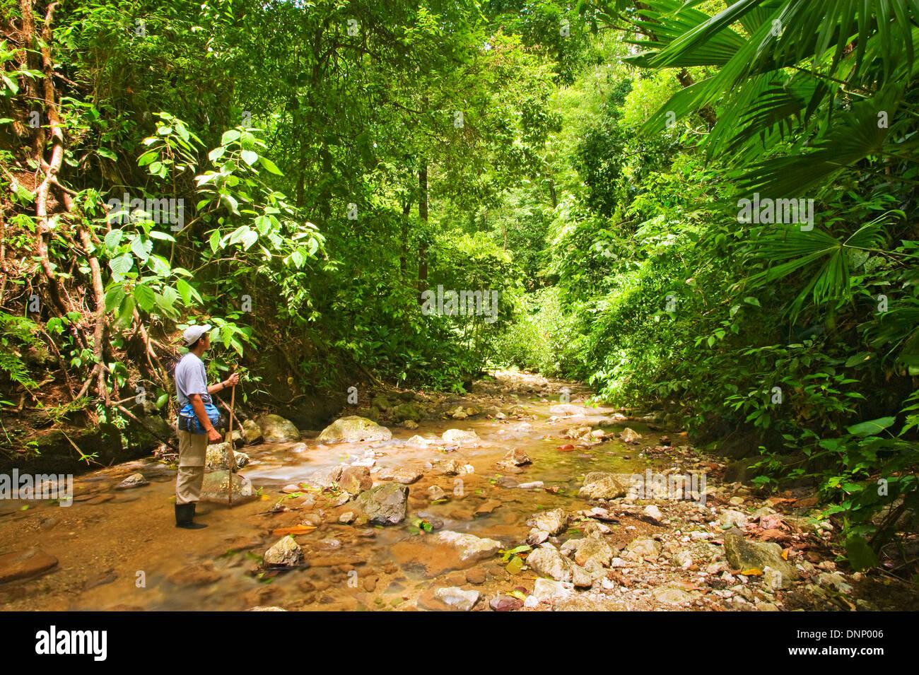 A river in Costa Rica's Osa Peninsula - Stock Image