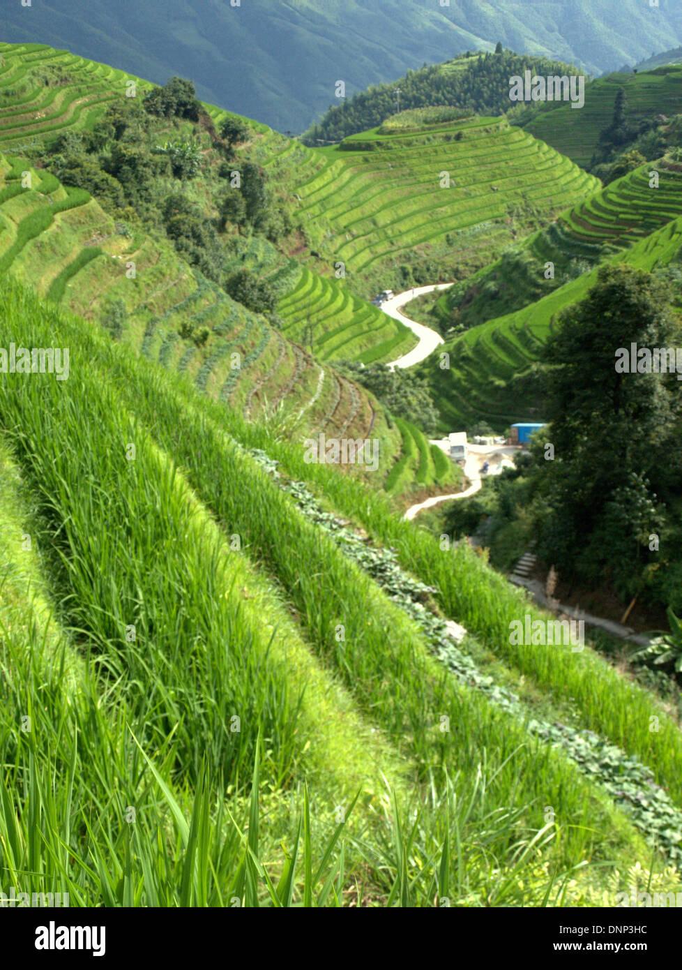 The Longsheng Rice Terraces (Lóngshèng Tītián) or Dragon's Backbone Rice Terraces, located in Longsheng County, Stock Photo