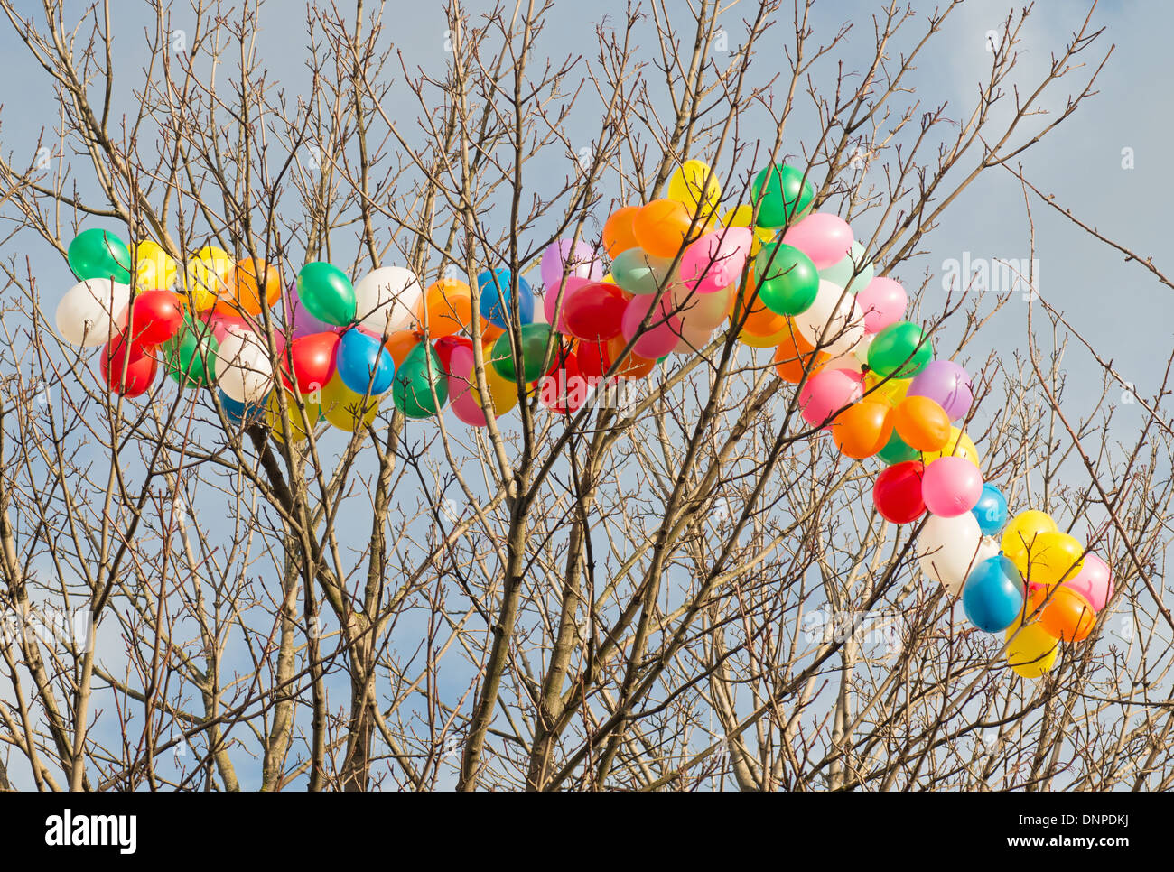 String of colourful balloons caught in the branches of a tree South Shields, north east England UK Stock Photo