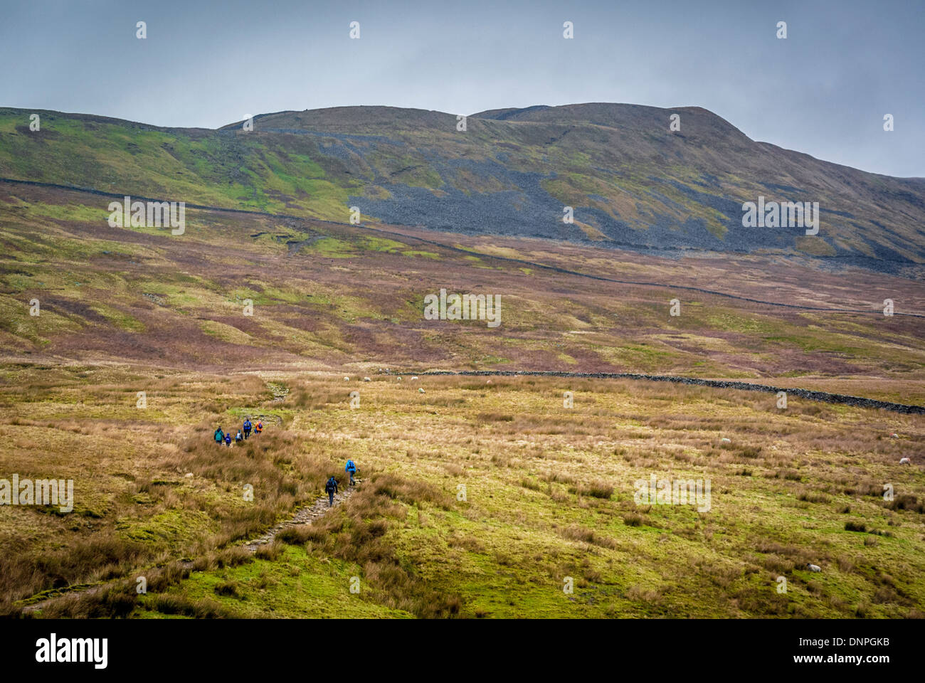 Whernside, North Yorkshire with walkers visible ascending. - Stock Image