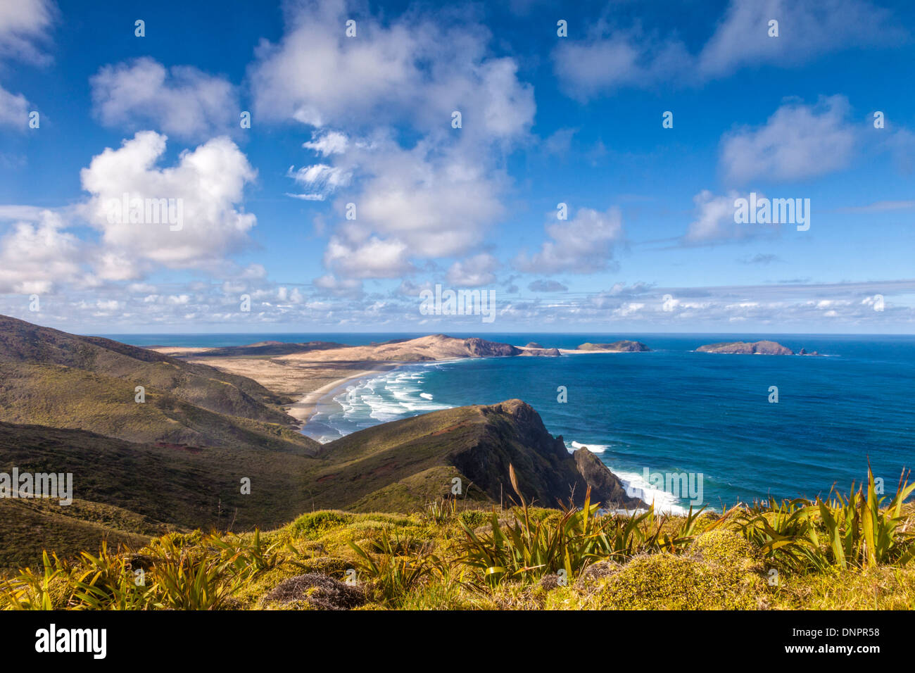 Cape Maria van Diemen from Cape Reinga, Northland, New Zealand. In the foreground are the miniature flax which grow at Cape Rein - Stock Image