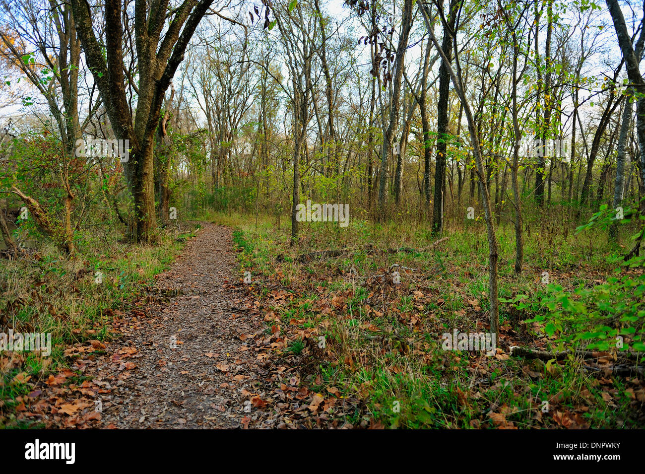 Path in the forest of Towne park, Mc Kinney, Texas, USA Stock Photo