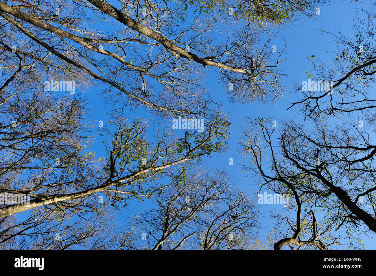 High trees in the forest of Towne park, Mc Kinney, Texas, USA Stock Photo