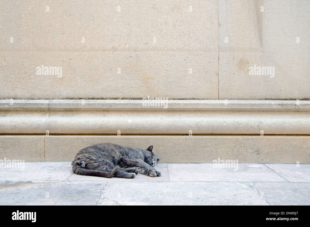 a sleeping street cat - Stock Image
