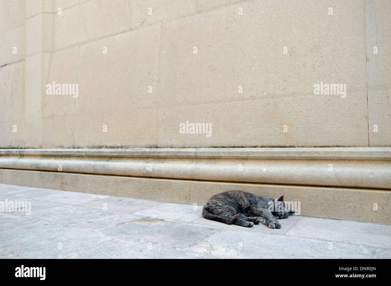 a sleeping street cat Stock Photo