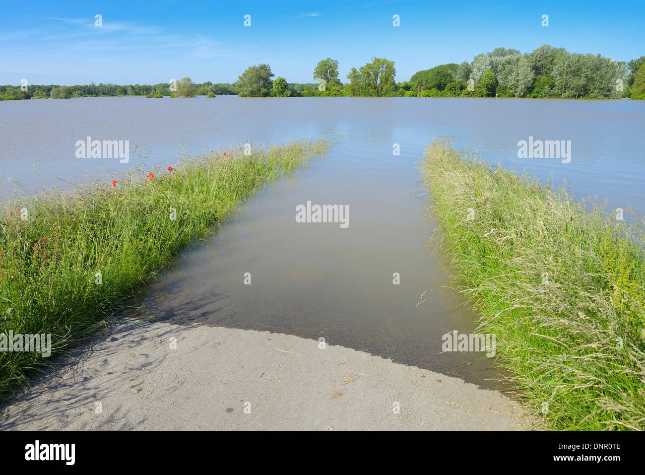 Flooded Area, Nature Reserve Kuehkopf-Knoblochsaue, Hesse, Germany, Europe Stock Photo